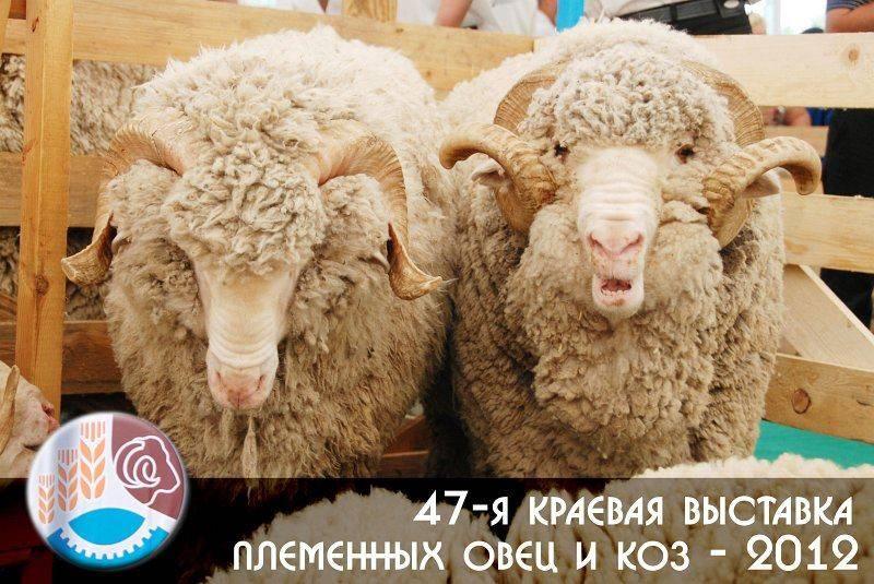 47 выставка племенных овец и коз г. Ставрополь 2012 г
